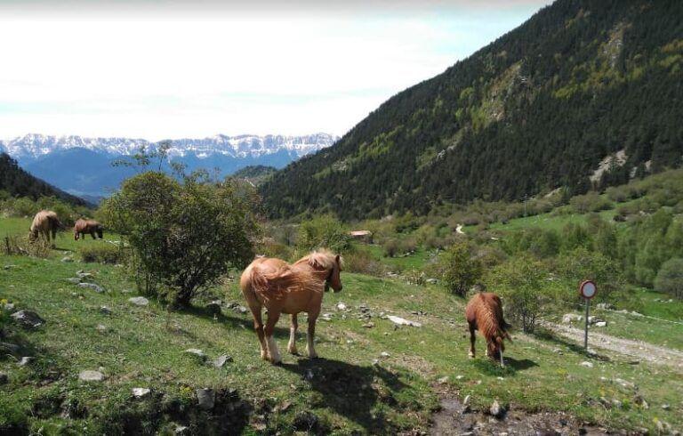 Vall de la llosa Lles de Cerdanya